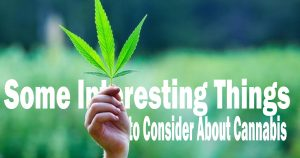 Some Interesting Things to Consider About Cannabis